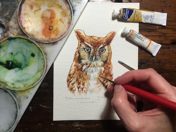 Eastern Screech Owl Portrait/study - Original Watercolour