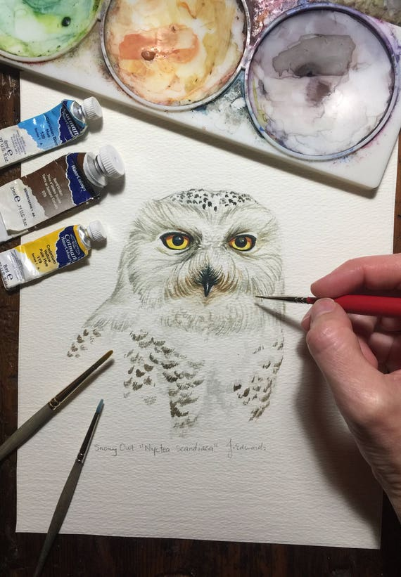 Snowy Owl portrait/original watercolour study