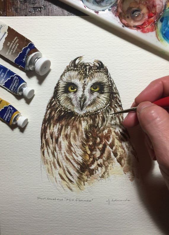 Short-eared Owl portrait/watercolour study