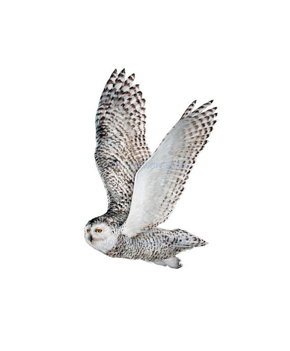 Snowy Owl Archival quality print - 3rd in series