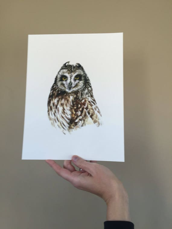Short-eared Owl Portrait Print