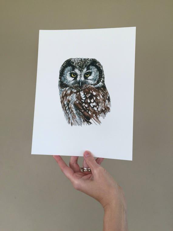 Boreal Owl Portrait Print