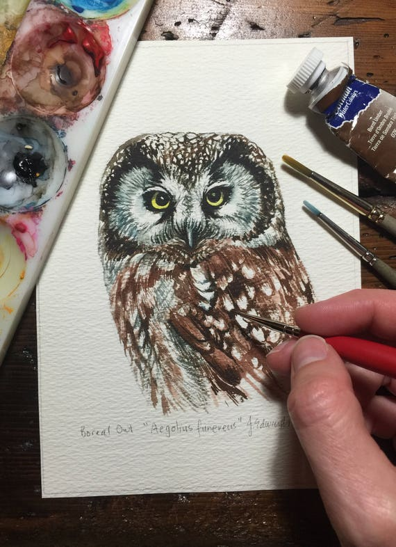 Boreal Owl - Original Watercolour study/portrait