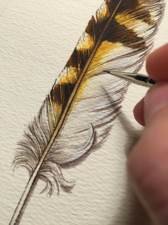 Short-eared Owl Feather study - Original Watercolour Painting