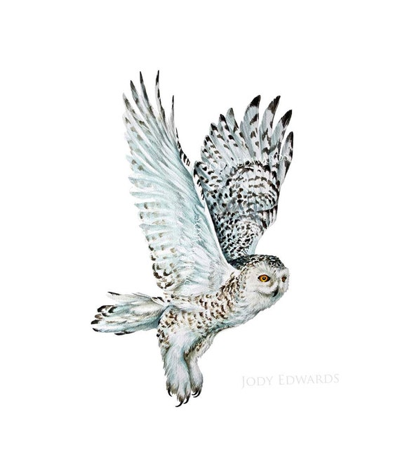 Snowy Owl - Archival Quality Print