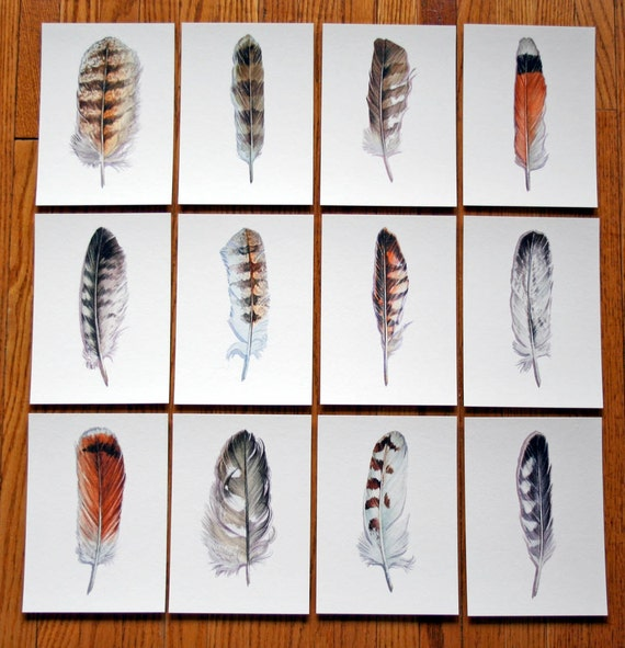 dee11fedd63da Raptor Feather Collection - Archival Quality Prints
