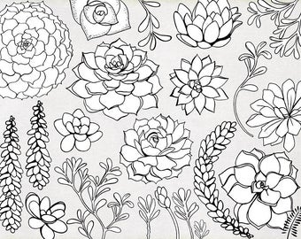 Succulent Line Art, Printable ClipArt Outline,  Succulent Flower Line Drawing, Digital Stamps + Photoshop Brushes, Art Images for Embroidery