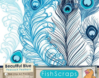Blue Peacock Feather Clip Art, Digital Graphics for Commercial Use, Royalty Free Small Business, Navy, Royal Blue Bird