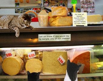 Whimsical Cat Art, Cheese Shop, Arthur Avenue, Bronx by Deborah Julian