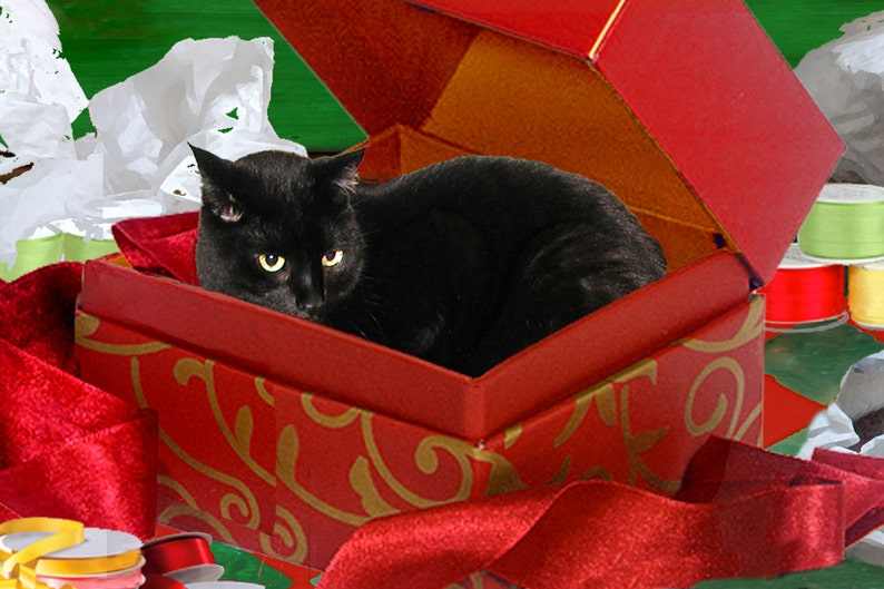 Boxed Cat Christmas Cards.Black Cat Christmas Card Handmade Cat In A Box Holiday Greeting Cards Whimsical Art Deborah Julian