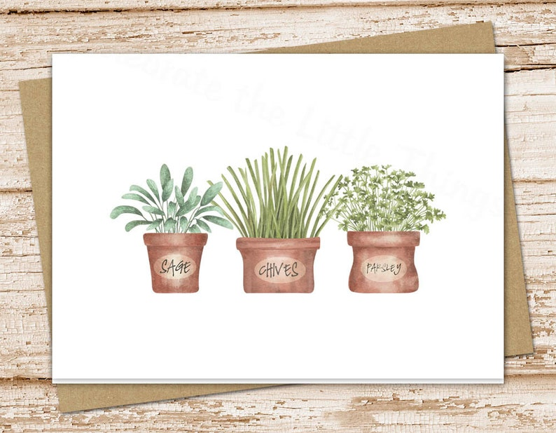 herb garden stationery set . cooking sage chives parsley . image 0