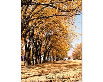 Autumn Leaves, Street Photography, Golden Trees, Yellow and Orange Rustic Home Decor Print, Fall Pictures, 8x10 8x12 11x14 12x18 Inches
