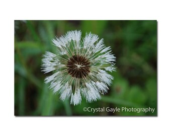 """Fine Art Photography Print ~ Dandelion Seeds ~ Floral, Green, White, Bathroom Decor, Entrance, Office, Gift for Her, 8x10 8x12 11x14 12x18"""""""