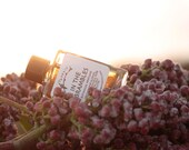 In The Brambles - A Late Summer Floral Berry - Botanical Perfume - 5ml