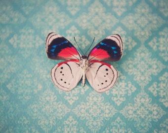 Little Butterfly ~ 8x10 Photo Print