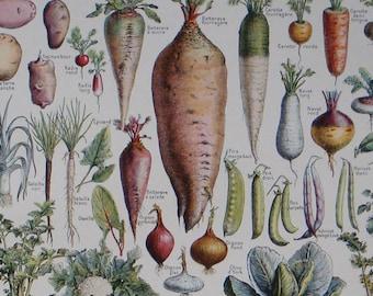 LÉGUMES et PLANTES POTAGÈRES (vegetables) a French vintage book print with illustration by Adolphe Millot Nouveau Larousse Illustré 1949