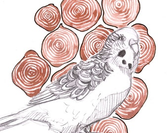 Original Watercolour and graphite drawing - Budgie with Stump Pattern
