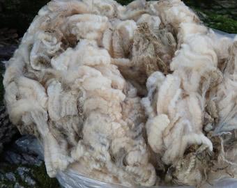 Raw White Romney Lamb Fleece - Lunar