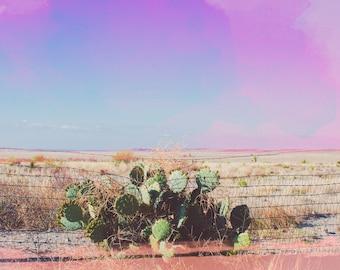 Cactus Photograph,Marfa Texas, Fine Art Photography, Nature Photo, West Texas, Pastel Colors, Landscape art, Travel Photo, Boho Art Print,