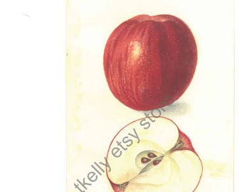 1909 apple print original, US Dept of Ag, MOTHER APPLE