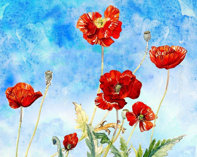 Featured listing image: Wild Poppies
