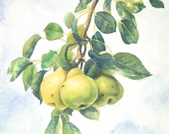Three Pears Archival Quality Print