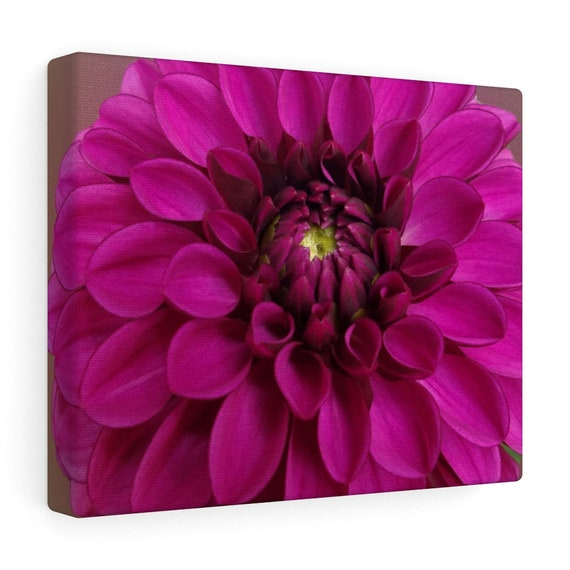 Dahlia Canvas Gallery Wraps
