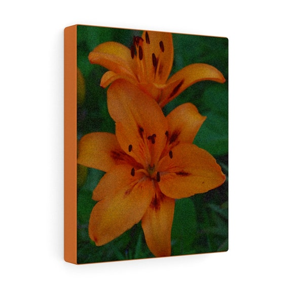 Tiger Lilies Canvas Gallery Wraps