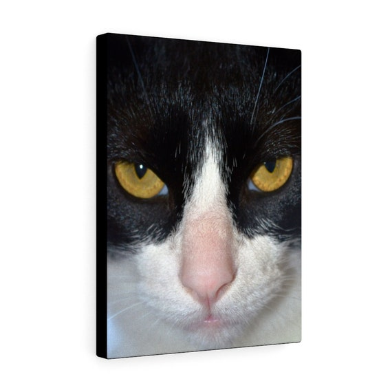 Batman the Cat Canvas Gallery Wraps