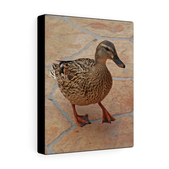 Just Ducky Canvas Gallery Wraps