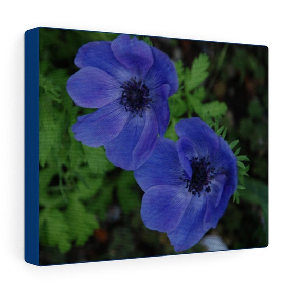 My Favorite Blue Flowers Canvas Gallery Wraps