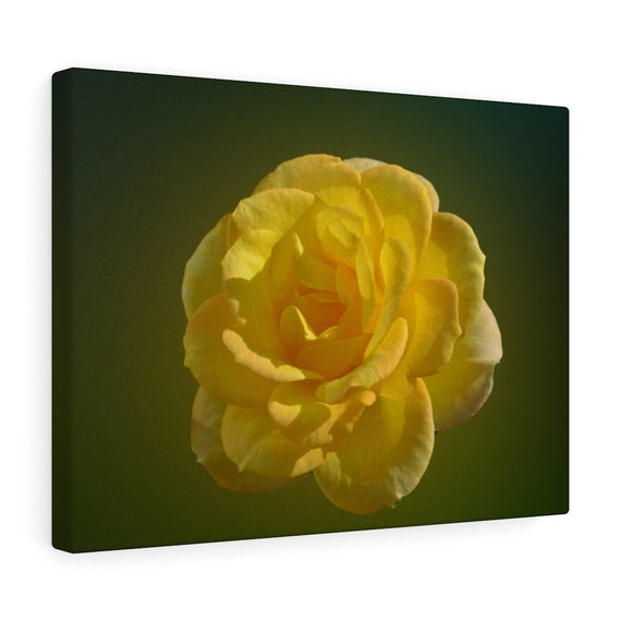 Yellow Rose of Texas Canvas Gallery Wraps