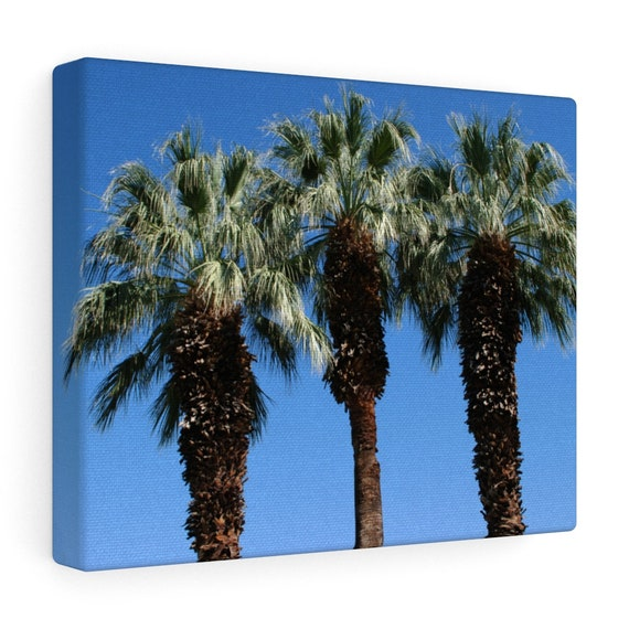 Three Sister's Palm Trees Canvas Gallery Wraps