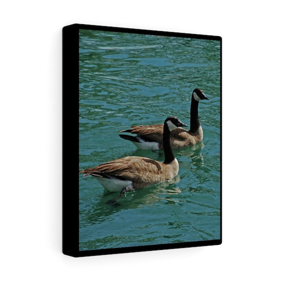 Canadian Geese Canvas Gallery Wraps