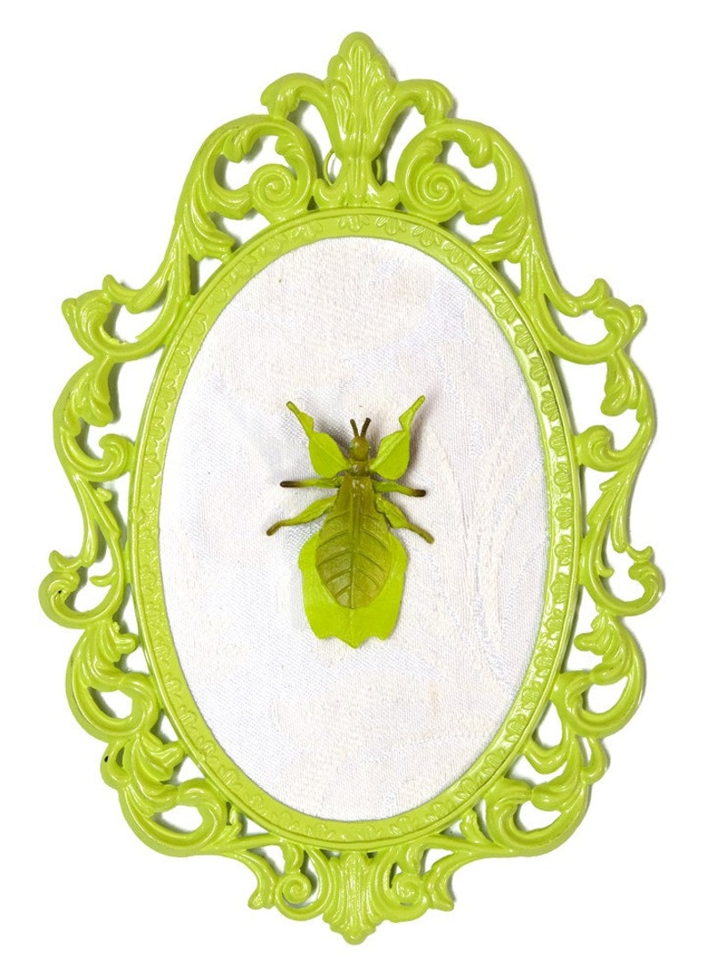 Leaf Bug Mounted in Lime Green Victorian Frame  Wall Art image 0