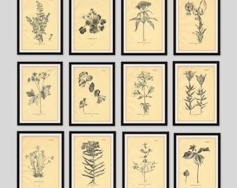 Any 6 Botanical Prints, Set of 6, Antique Botanical, Botanical Print Set, Set of Prints, Cottage Decor, Old Flower Illustration, Wildflower