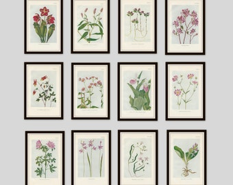 Any 6 Botanical Prints, Set of 6, Antique Botanical, Botanical Print Set, Set of Prints, Cottage Decor, Victorian, Lithograph, Wildflower