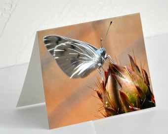 Photo Note Card White Butterfly on Cactus Bud Photography Blank Card