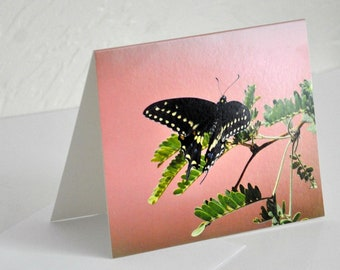 Photo Note Card Black Butterfly on Mesquite Photography Blank Card