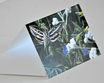 Photo Note Card Hummingbird Moth in Flowers Photography Blank Card