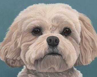 Custom Pet Portrait - painting, dog art, dog portrait, cavachon