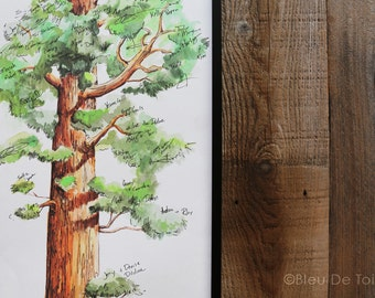 Guest Book Alternative Signature Tree: Rustic Wedding Theme, Watercolor Sequoia Tree, Memorable Wedding in the Woods, Housewarming Gift
