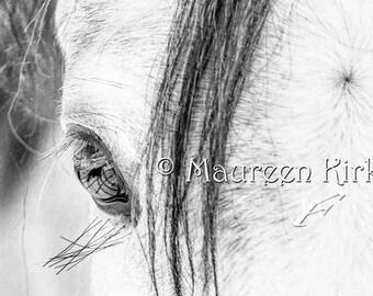 Horse canvas print black and white horse decor gray Arabian horse eye  horse wall art horse large art photography art print photo