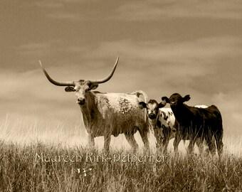 Longhorn photography black and white cow art Rustic wall art Texas longhorn cow and calves nursery décor for boy black cow home decor photo