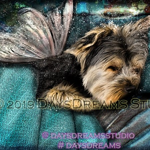 Sweet Tiny Yorkie Elder Senior Yorkshire Terrier Older Yorkie Dog Pop Art Pet Portrait Print or Sympathy Card Tribute Memorial Pop Art Gift