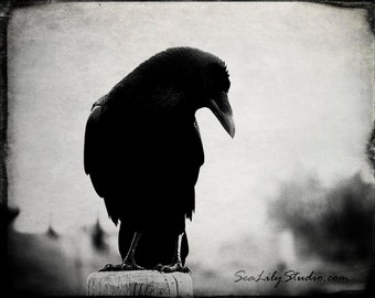 The Raven : crow raven photography black bird goth gothic dark dream surreal poe poem rustic vintage halloween 8x10 11x14 16x20 20x24 24x30