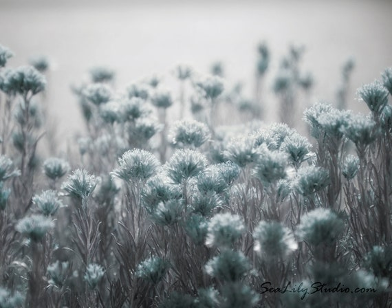 Floral Black And Grey Nature Tattoo: Pale Blue Light : Desert Flower Photo Nature Photography