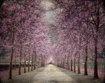 Vineyard photo 16x20 : surreal photography napa valley lavender black gray tree wine country romantic ethereal spring summer home decor