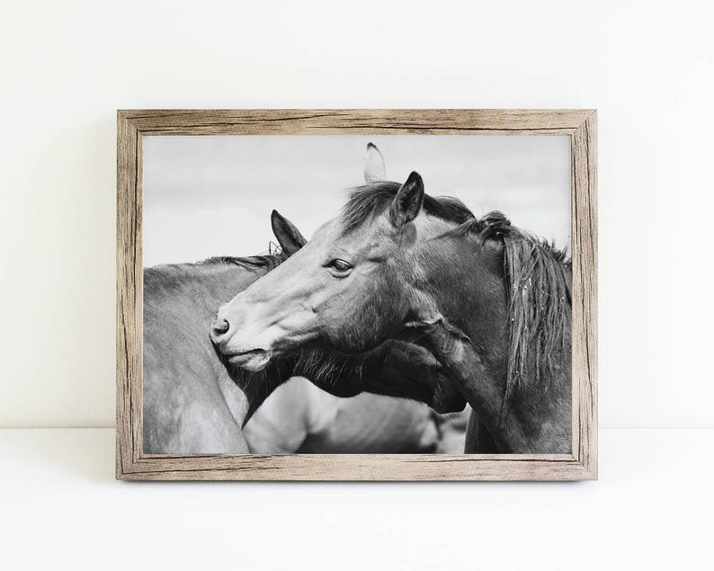 Rugged Western Horses Physical Print Horse Art Black and White Horse Photography