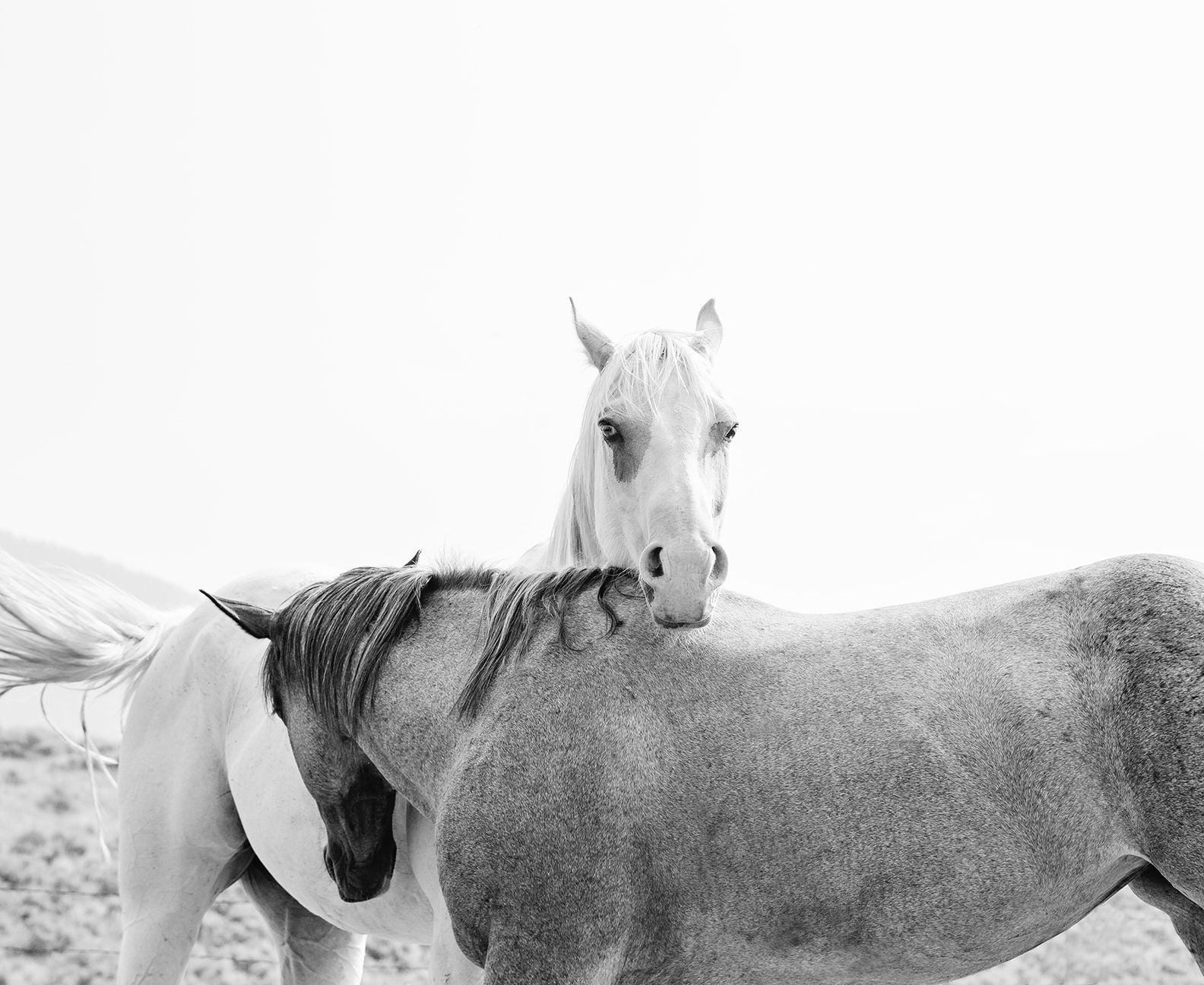Modern horse photography in black and white physical print animal wall art